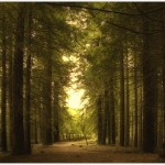 Bosque de secuoyas del monte Cabezón