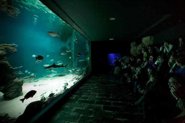 Museo Marítimo del Cantábrico02