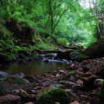 Parques Naturales de Cantabria